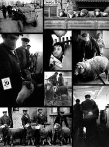 Aukcja baranów w Łące [Fotografia]