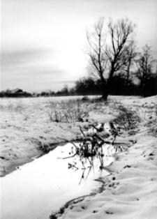 Srebrny potok [Fotografia]