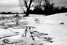 Dopływ Mleczki [Fotografia]