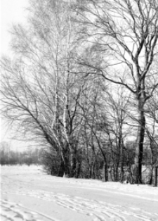 Drzewa za Mleczką [Fotografia]